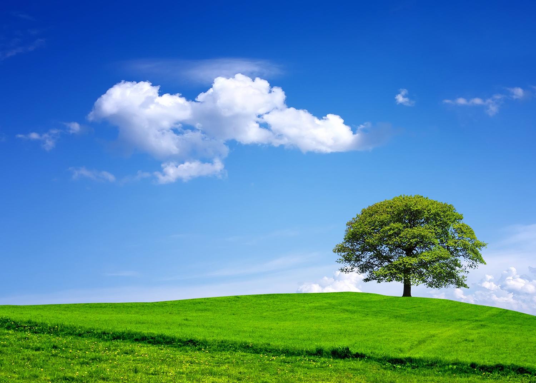 緑と青空が広がる風景